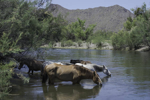 Horses Art Print featuring the photograph Cooling Off by Lorraine Harrington