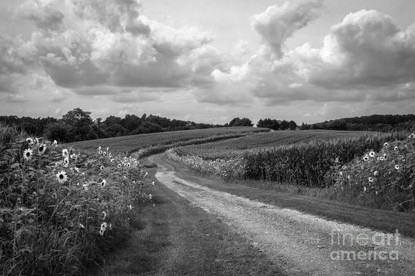 Sunflower Art Print featuring the photograph Country Road by Chris Scroggins