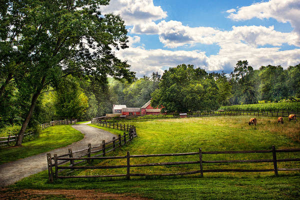 Cow Art Print featuring the photograph Country - The Pasture by Mike Savad