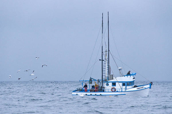 Crab Boat Art Print featuring the photograph Crab Boat Dropping And Pulling Their Pots by Scott Lenhart