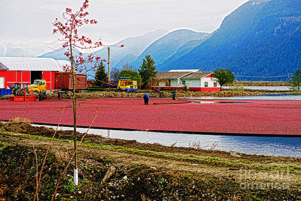 Workers Art Print featuring the photograph Cranberry Field Workers by Randy Harris
