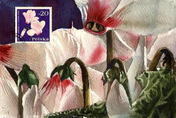 Watercolor Cyclamen Art Print featuring the painting Cyclamen Painting With Stamp by Alfred Ng