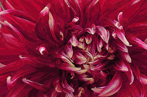 Beautiful Art Print featuring the photograph D Light Ful Dahlia by David Kehrli