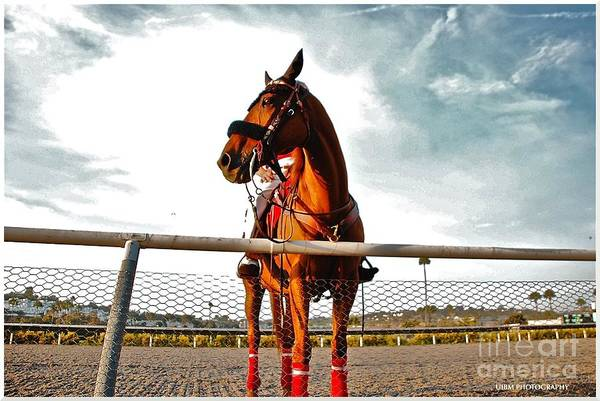 Horse Art Print featuring the photograph Day At The Track by Matthew Heller