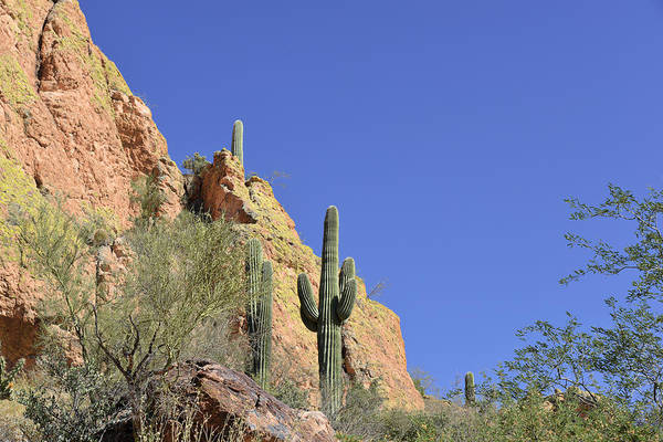 Arizona Art Print featuring the photograph Desert Plants Of The Superstitions by Christine Till