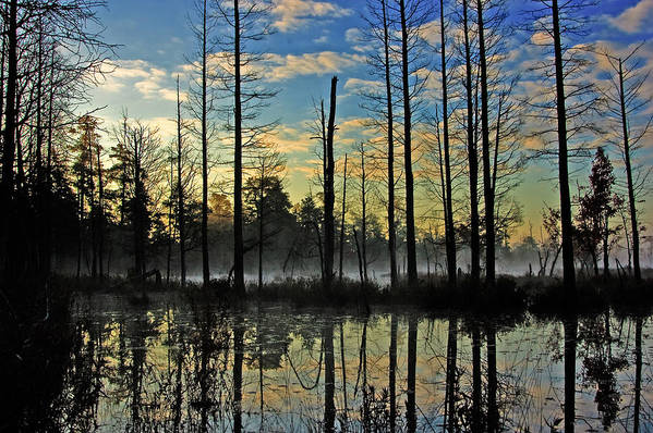 Landscape Print featuring the photograph Devils Den In The Pine Barrens by Louis Dallara