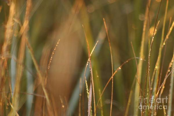 Dew Art Print featuring the photograph Dewy Grasses by Nadine Rippelmeyer