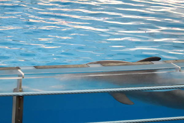 Inner Art Print featuring the photograph Dolphin Show - National Aquarium In Baltimore Md - 121211 by DC Photographer