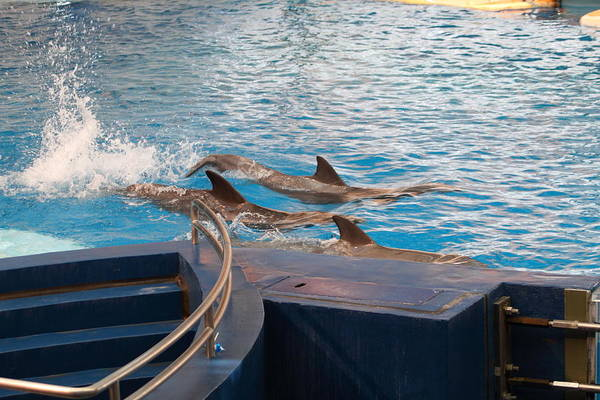 Inner Art Print featuring the photograph Dolphin Show - National Aquarium In Baltimore Md - 1212186 by DC Photographer