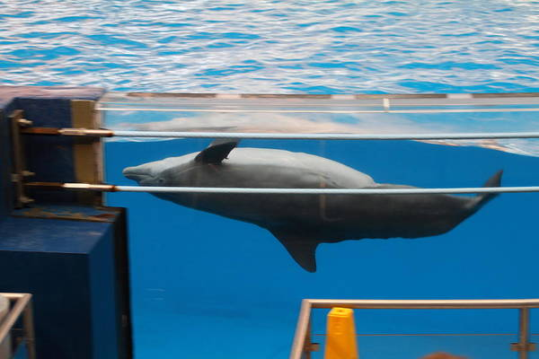 Inner Art Print featuring the photograph Dolphin Show - National Aquarium In Baltimore Md - 1212198 by DC Photographer