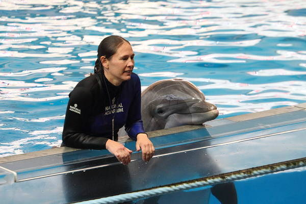 Inner Art Print featuring the photograph Dolphin Show - National Aquarium In Baltimore Md - 1212230 by DC Photographer