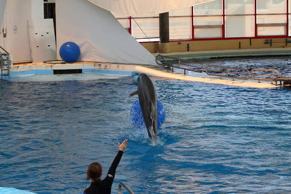 Inner Art Print featuring the photograph Dolphin Show - National Aquarium In Baltimore Md - 121239 by DC Photographer