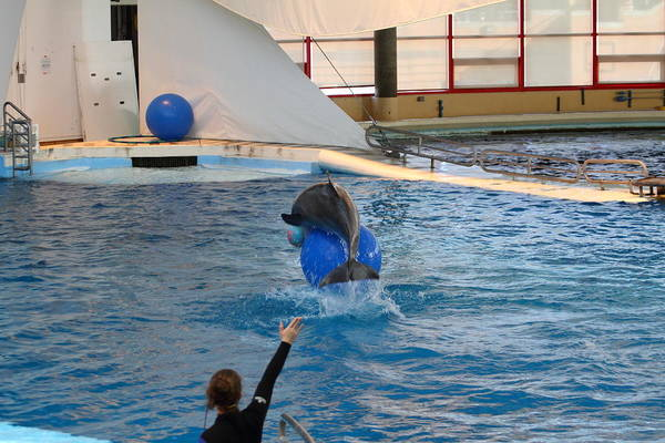 Inner Print featuring the photograph Dolphin Show - National Aquarium In Baltimore Md - 121240 by DC Photographer