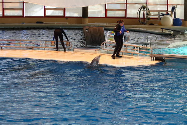 Inner Art Print featuring the photograph Dolphin Show - National Aquarium In Baltimore Md - 121246 by DC Photographer
