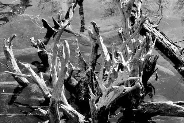 Reflection Art Print featuring the photograph Driftwood On Lost Lake by Michelle Calkins