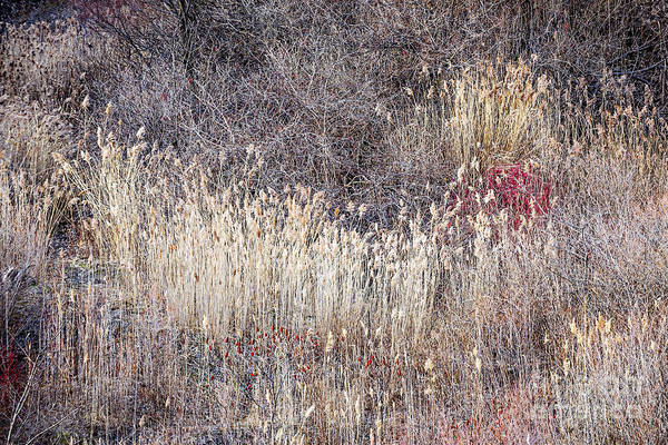 Grasses Art Print featuring the photograph Dry Grasses And Bare Trees In Winter Forest by Elena Elisseeva