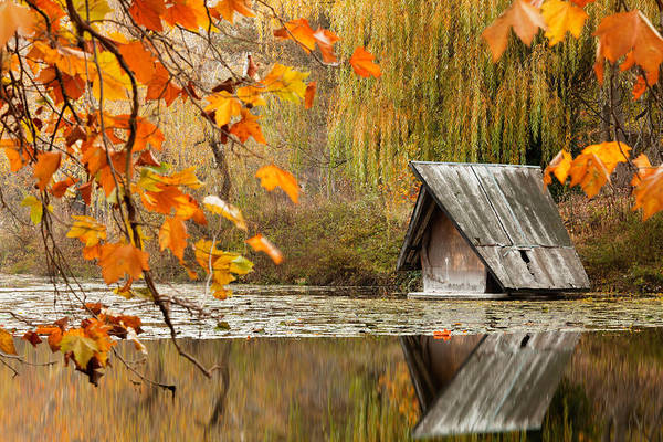 Dawn Art Print featuring the photograph Duck's House by Evgeni Dinev