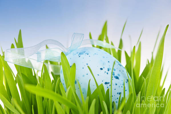 Easter Print featuring the photograph Easter Egg In Grass by Elena Elisseeva