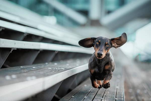 Urban Art Print featuring the photograph Ein Kleiner Hund La?uft Durch Die Welt.... by Heike Willers