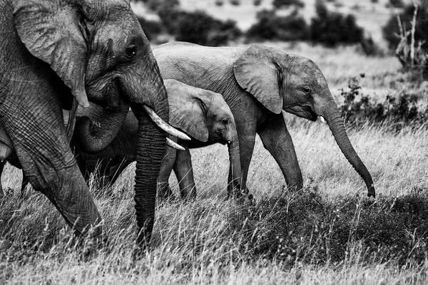 Elephant Art Print featuring the photograph Elephant Family by Vedran Vidak