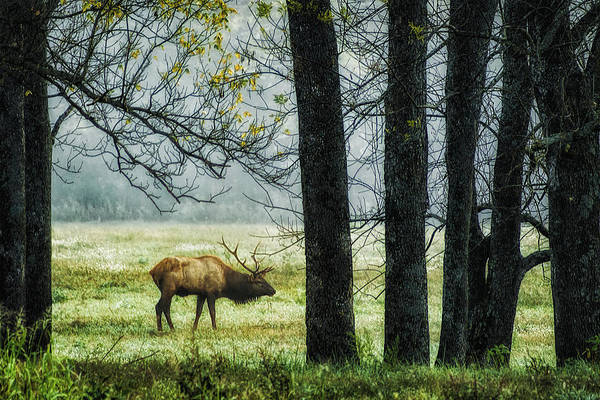 Elk Print featuring the photograph Emerging From The Fog by Priscilla Burgers