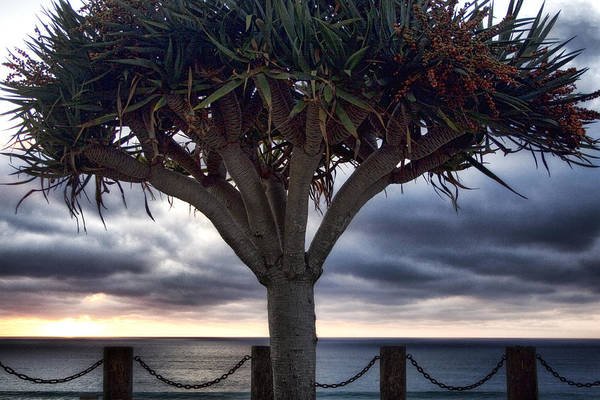 Encinitas Art Print featuring the photograph Encinitas Sunset by Carol Leigh