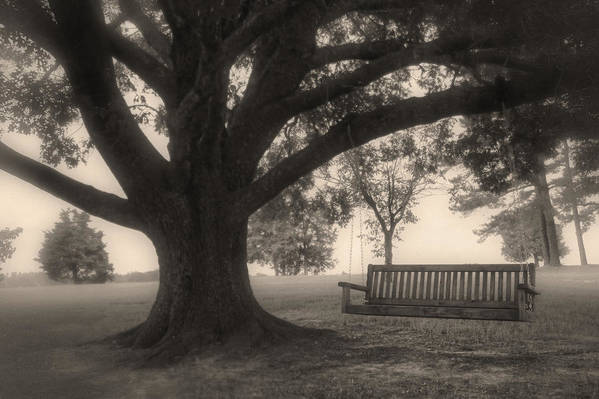 Swing On A Tree Art Print featuring the photograph Evening Swing - Oak Tree - Altus Arkansas by Jason Politte