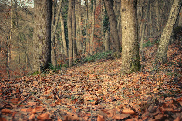Woods Art Print featuring the photograph Expectation by Taylan Apukovska