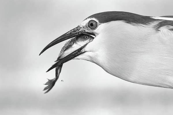 Heron Art Print featuring the photograph Eyes by Sufang Wang