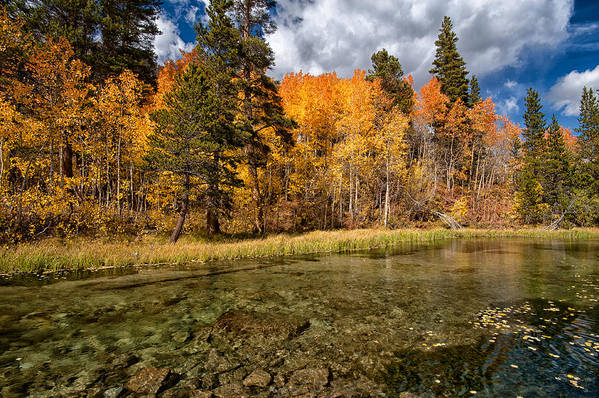 Fall Art Print featuring the photograph Fall Along Bishop Creek by Cat Connor