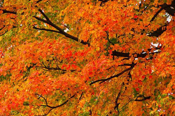 Fall Fiesta Art Print featuring the photograph Fall Fiesta by Rachel Cohen