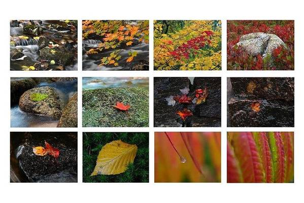 Fall Art Print featuring the photograph Fall Greetings by Juergen Roth