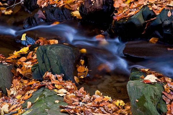 Fall Autumn Season Leaves Stream Creek Water Flowing Rocks Stones Foam Movement Action Hard Soft Light Overcast Brisk Chilly Brown Yellow Green Black Colors Outdoors Nature Clean Crisp Cool Woods Unspoiled Art Print featuring the photograph Fall In Rock Creek Park by Bill Jonscher