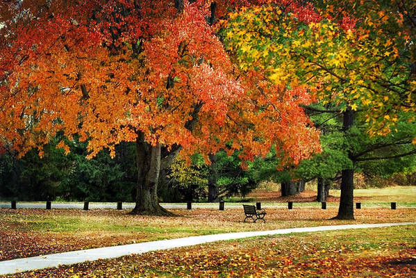 Fall Print featuring the photograph Fall In The Park by Christina Rollo