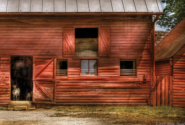 Savad Art Print featuring the photograph Farm - Barn - Visiting The Farm by Mike Savad