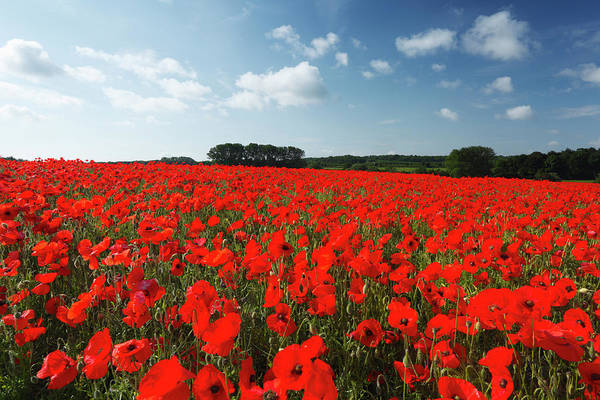 Scenics Art Print featuring the photograph Field Of Common Poppies by James Osmond