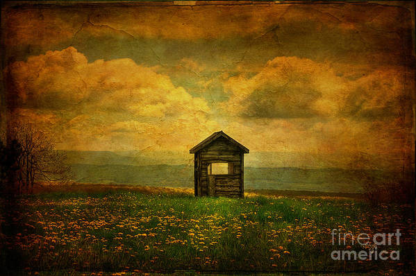 Shed Art Print featuring the photograph Field Of Dandelions by Lois Bryan