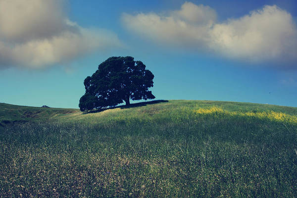 Mt. Diablo State Park Art Print featuring the photograph Find It In The Simple Things by Laurie Search