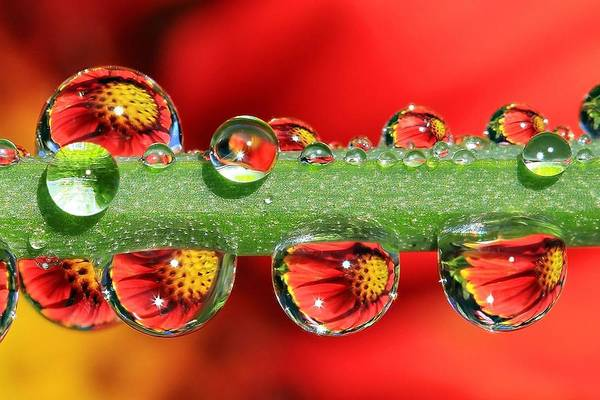 Water Drops Print featuring the photograph Firey Drops by Gary Yost