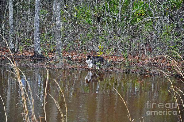 Cat Art Print featuring the photograph Fishing Feline by Al Powell Photography USA