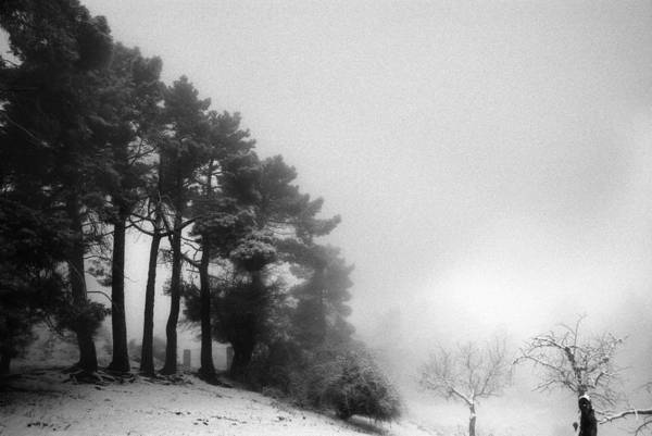 Black And White Art Print featuring the photograph Five Trees by Guido Montanes Castillo