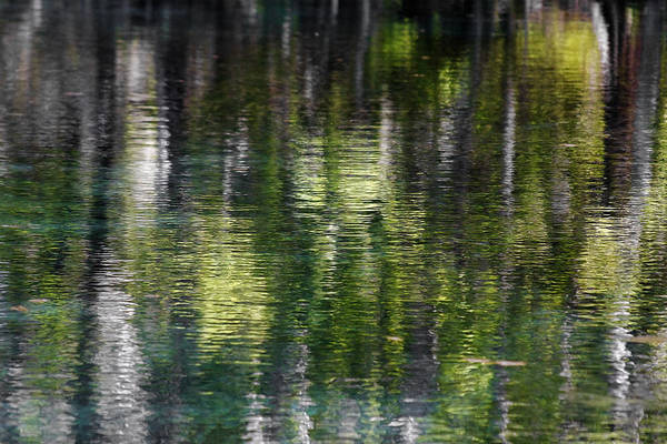 Silver Art Print featuring the photograph Florida Silver Springs River by Christine Till