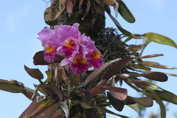 Purple Flower Art Print featuring the photograph Flower In A Tree by Dick Willis