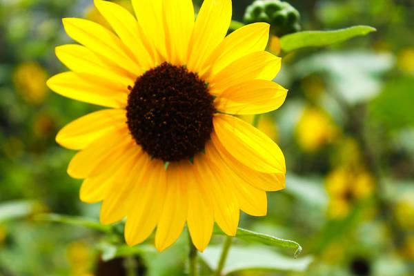 Landscape Art Print featuring the photograph Flower In The Sun by Elijah Gomez