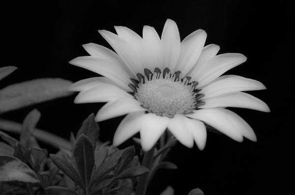 Flower Art Print featuring the photograph Flower by Ron White
