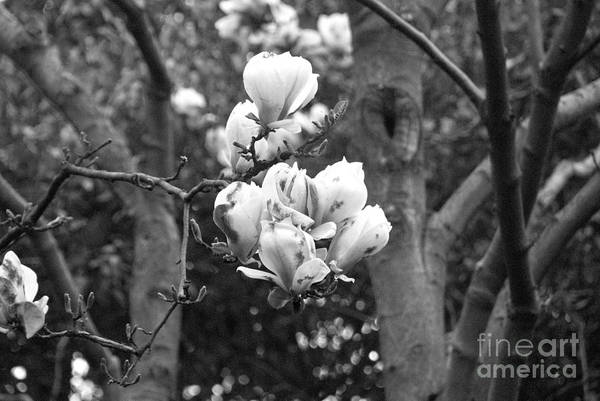 Flowers Art Print featuring the digital art Flowers On A Tree by Pravine Chester