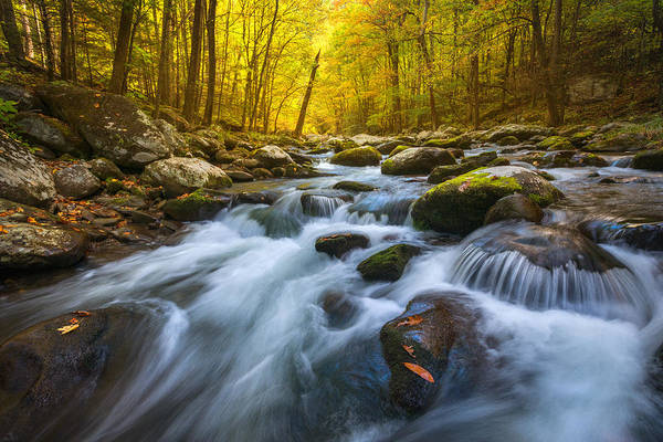 Gsmnp Art Print featuring the photograph Forest Flow by Chris Moore