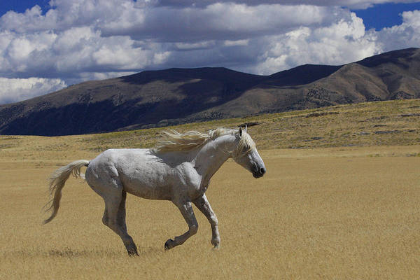 Wild Art Print featuring the photograph Freedom On The Run by Gene Praag