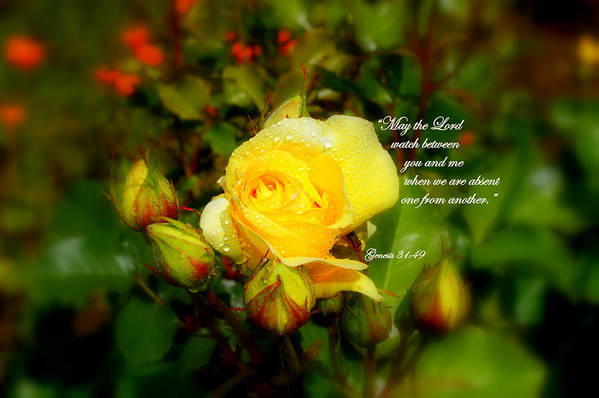 Yellow Rose Art Print featuring the photograph Friendship by Jeanne Geidel-Neal