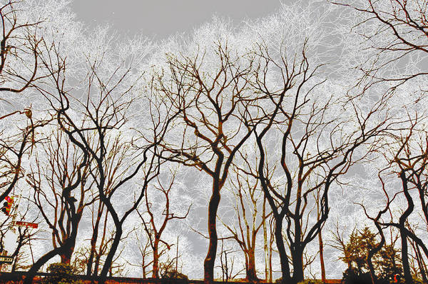 Central Park Art Print featuring the photograph Frosted Forest by Susi Perla